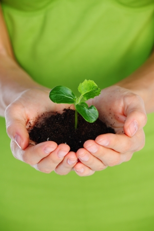 Plant in the girl hands photo
