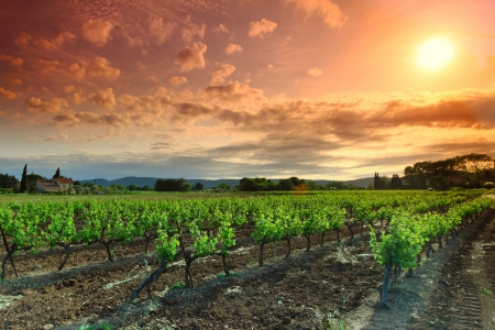 australia farm: Orange Sky over Green Vineyard