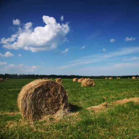 hay on field under blue sky photo