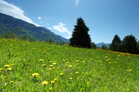 a beautiful view of the alps tree on grass field Stock Photo - 15527111