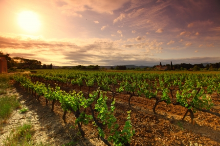 wineries: Orange Sky over Green Vineyard