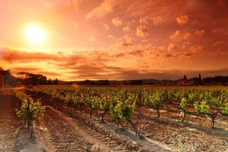 chardonnay: Amazing Vineyard Sunset in france Stock Photo