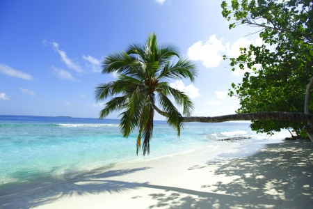 Palm on beach and sea background of malives resort photo