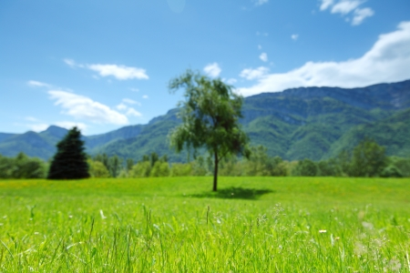 a beautiful view of the alps tree on grass field photo