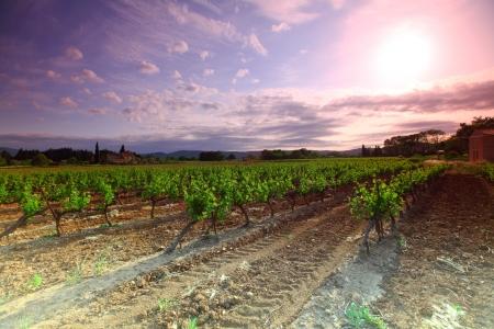 Amazing Vineyard Sunset in france photo