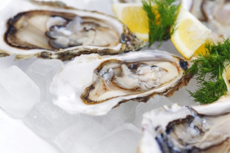 Oysters with lemon and dill on plate with ice photo