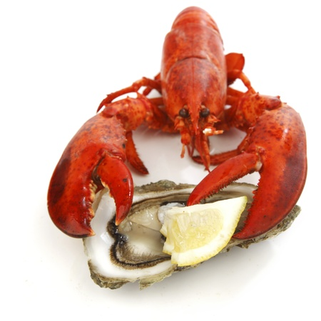 Lobster and oyster isolated on white background photo