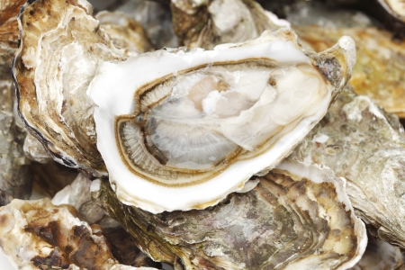 half fish: Oysters background macro close up Stock Photo