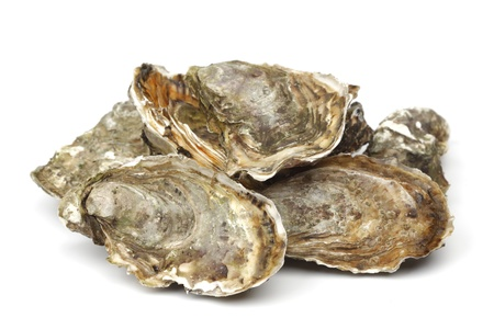 half fish: Oysters isolated on white background Stock Photo