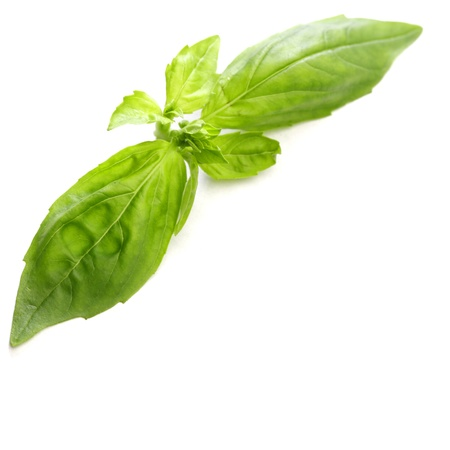 Basil leaves isolated on white background Stock Photo - 19547768