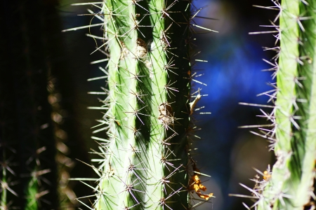 close up image: A close up image of a spiked cactus Stock Photo