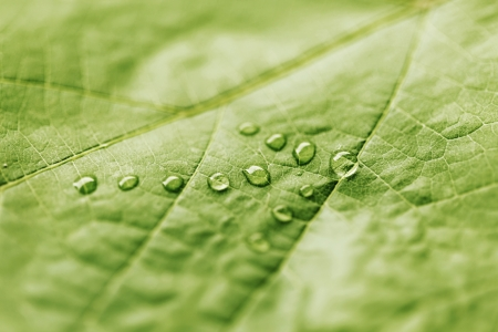 Green leaf with drops of water shaped as arrow, direction concept photo