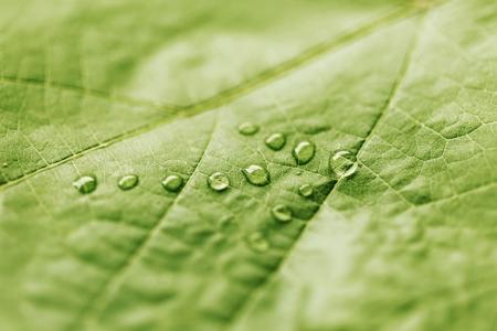 Zielony liść z kroplami wody w kształcie jak strzałki, koncepcja kierunek photo