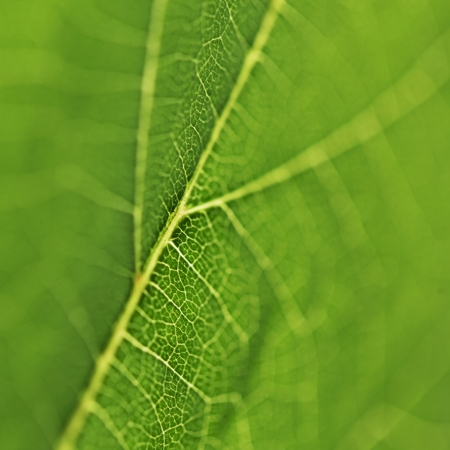 Fresh dreen leaf texture macro close-up photo