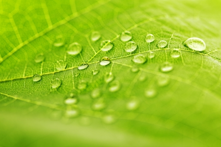 Water drop on green leaf macro photo