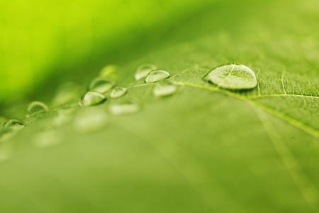 緑の葉のマクロの水低下