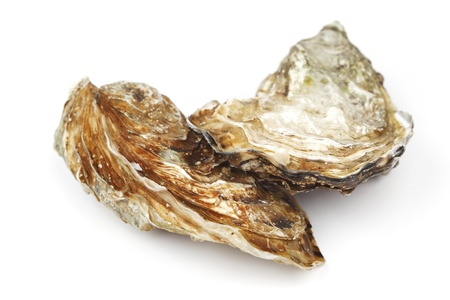 Oysters isolated on white background 版權商用圖片
