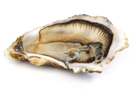 half fish: Oyster isolated on white background