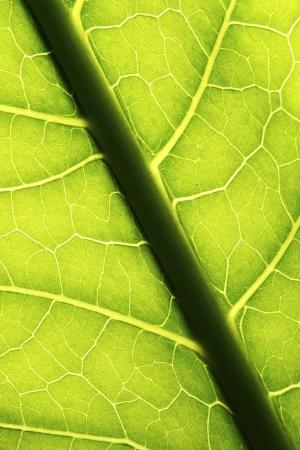 contrasting: leaf background