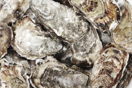 Oysters background  photo