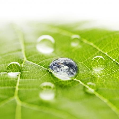 Мир в капле воды на листе Фото со стока