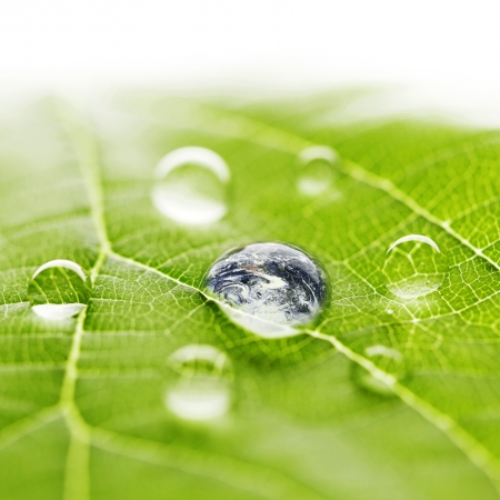 The world in a drop of water on a leaf photo