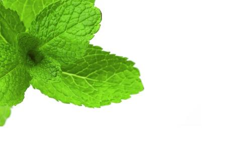 mint isolated on white background photo