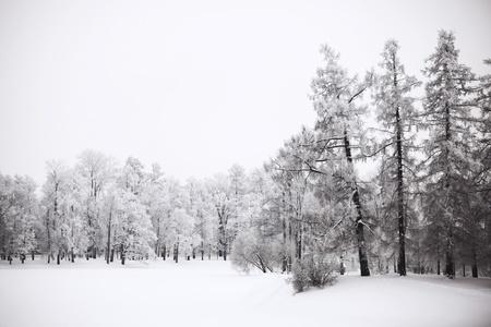 arboles blanco y negro: ?rboles de invierno sobre fondo blanco nieve