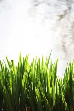 grass on water background Stock Photo - 21301848