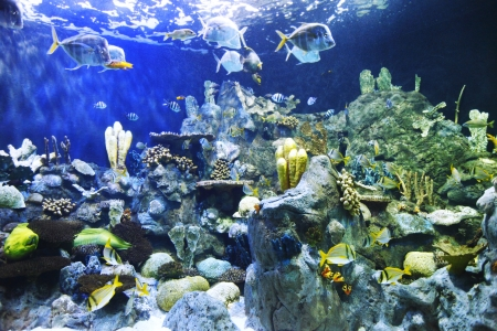 Various tropical fish on a coral reef