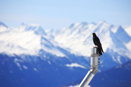 ice top mountains starling bird photo