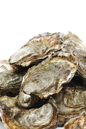 Oysters isolated on white background photo