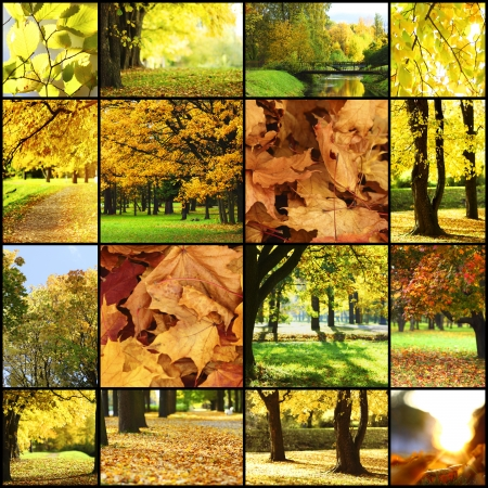 collage of autumn backgrounds photo