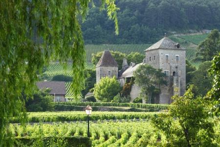 ジュヴレ シャンベルタン、フランスのブドウ園ビュー 写真素材
