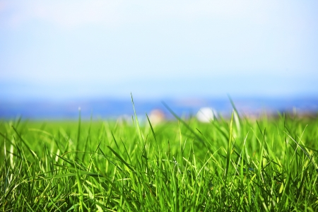 green grass under blue sky Stock Photo