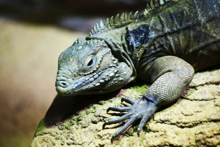 chink: close up lizard in zoo Stock Photo