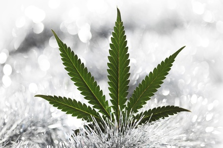 leaf marijuana:  macro de fondo Rastaman vacaciones cerca