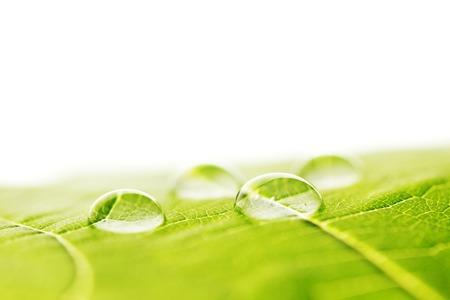 녹색 잎 매크로에 워터 드롭