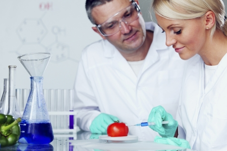 manand woman try to change tomato DNA Stock Photo - 22472157