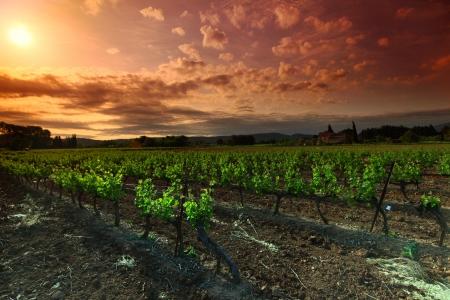 grape field: Amazing Vineyard Sunset in france Stock Photo