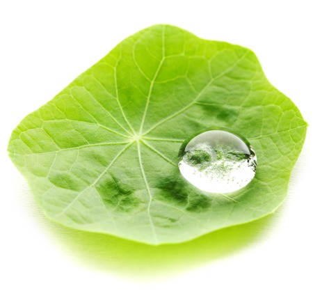 Water drop on leaf isolated on white background macro photo