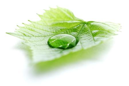 Waterdruppel op blad geïsoleerd op witte achtergrond macro