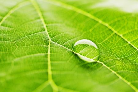 Water drop on fresh green leaf macro Stock Photo