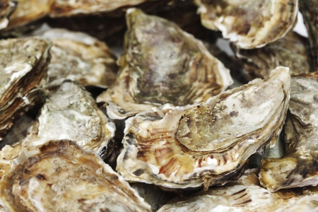 Oysters background macro close up photo