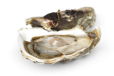 Oyster isolated on white background photo
