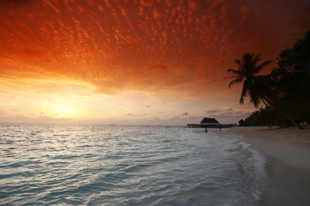Beautiful view of sea and empty beach with palms on sunset photo