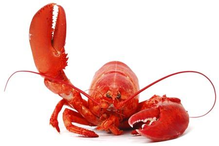 Bonjour homard isolé sur blanc