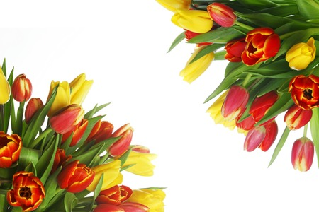 Bouquet of yellow and red tulips in corner isolated on white background photo