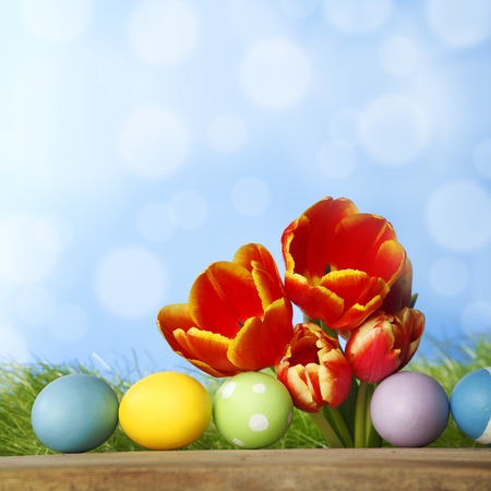 Tulips and easter eggs over green grass and blue sky background photo