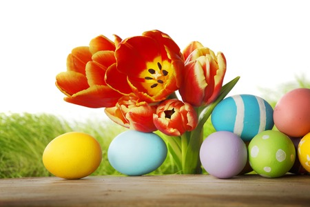 Tulips and easter eggs isolated on white background photo